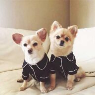 Factory Wholesale Designer Pet Coat Fashion Silk Pajamas Dog Clothes 06-0298